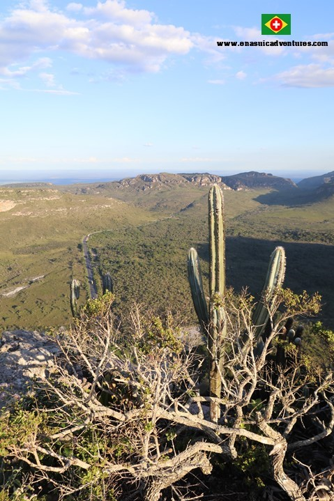 The vegetation of the Pai Inácio Hill - Chapada Diamantina